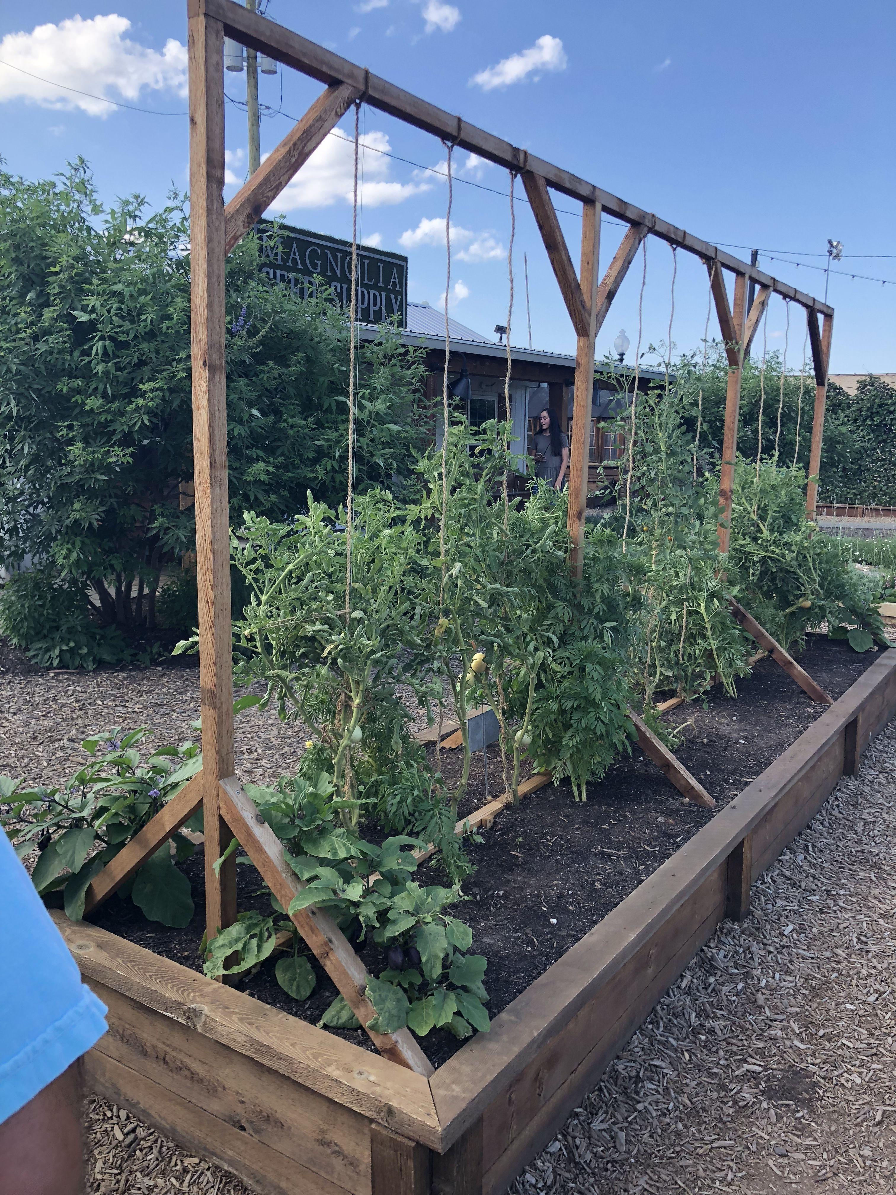 Tomato Trellises At Magnolia Silos In Waco Texas With Images