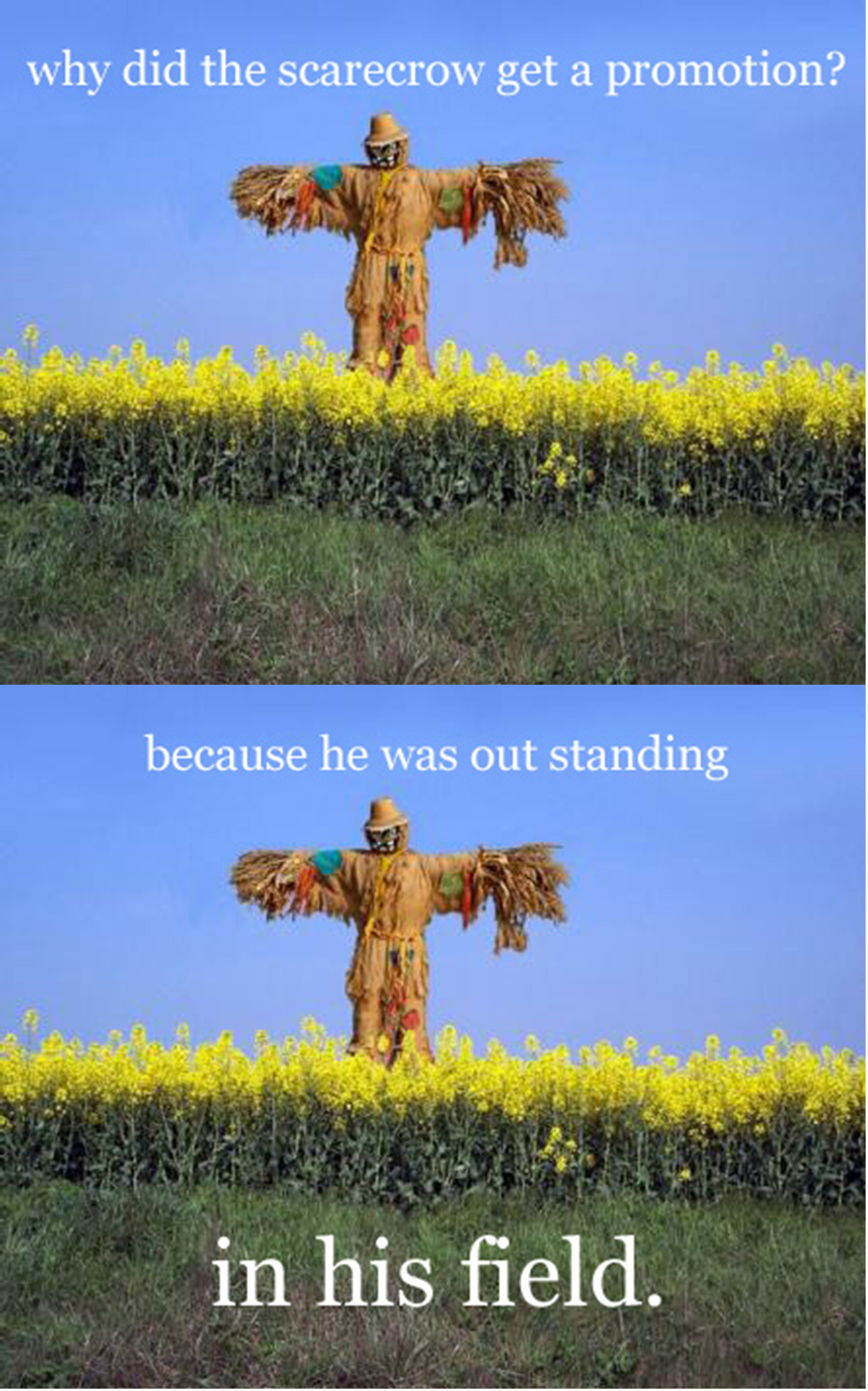 why did the scarecrow get a promotion because he was out standing why did the scarecrow get a promotion because he was out standing in his field
