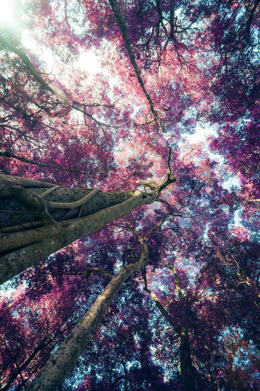 Pin By Zulfakhriy On Tempat Untuk Dikunjungi Pinterest Pink
