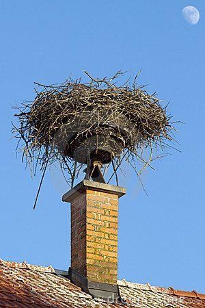 Stork Nest On Chimney Aves Ninho