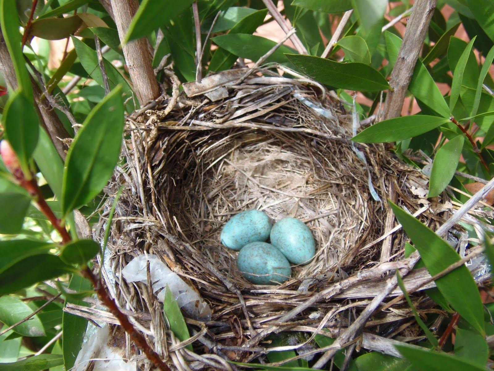 птицы их птенцы и гнезда картинки него появляется возможность