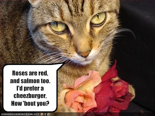 Valentine S Pictures Funny Day Twitter Ladies Confess To