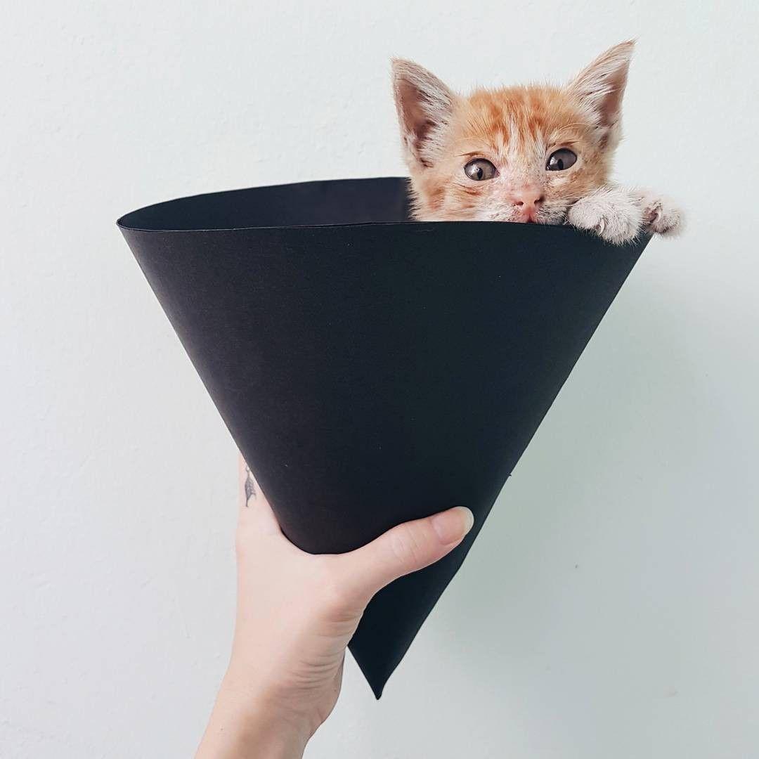 Is That A Spider Cat Kitten