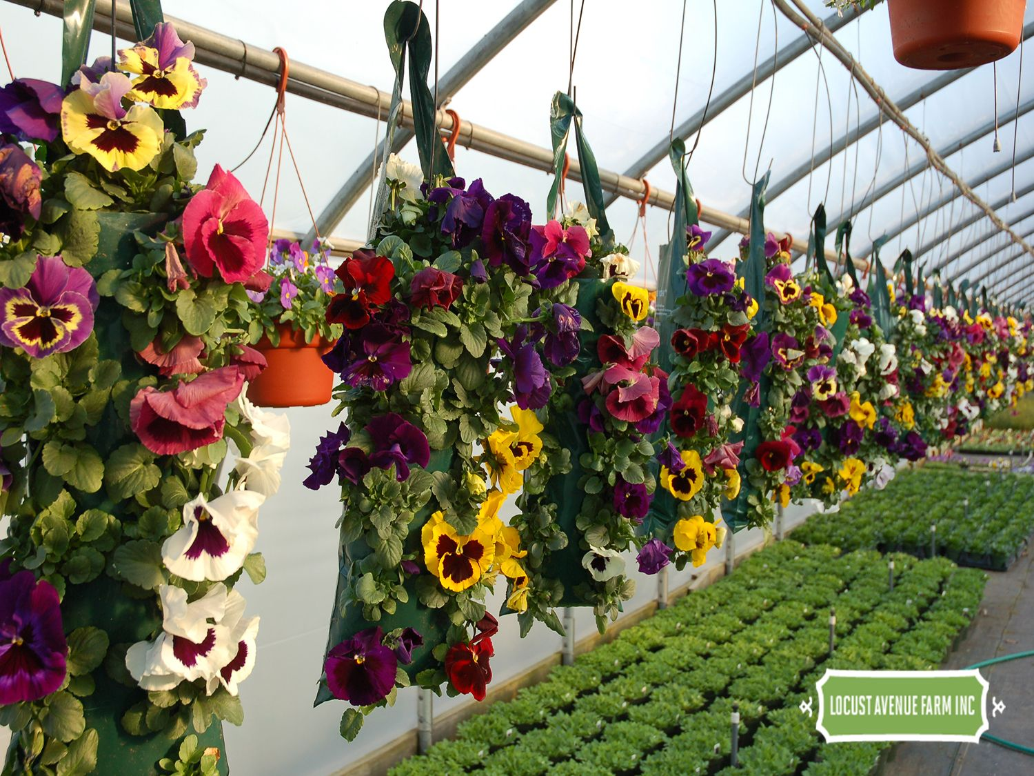 Pin by Plant Something Long Island on Local Garden Centers ...