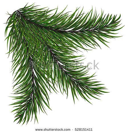 New year green Christmas trees and wreaths Fir branch with long needles on a white background