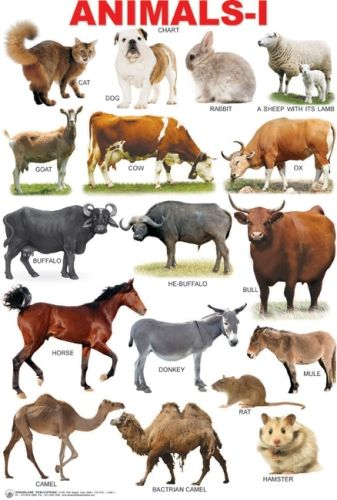 Animals 1 Chart Animals name in english, Learn english