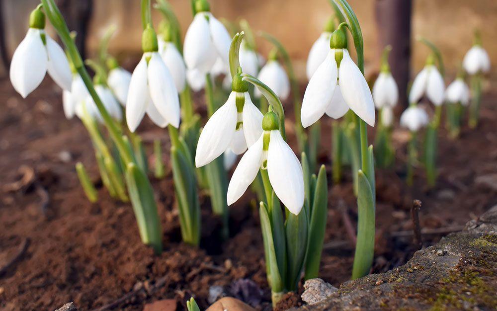 The 21 best plants for winter garden colour Gardening