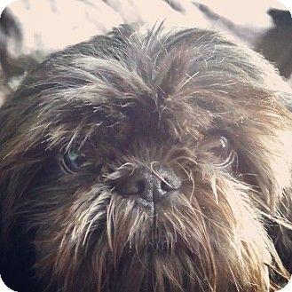 Pet Not Found Pets Dog Adoption Kitten Adoption