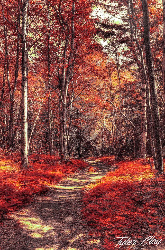 Personal Excursion Landscapes Autumn Landscape Fall Landscape Photography Landscape Photography