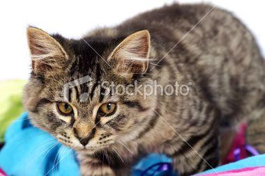 Adorable tabby kitten Royalty Free Stock Photo
