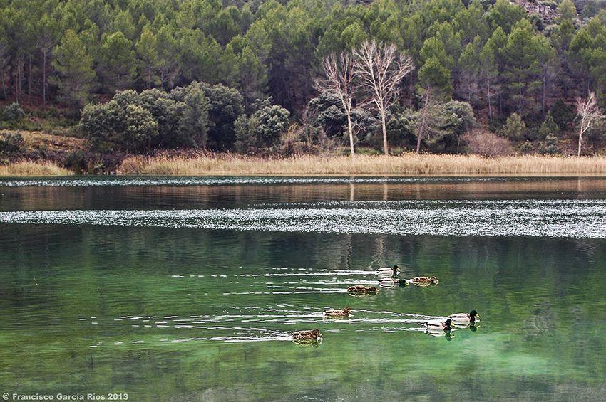 Ánades reales nadando en Las Lagunas de Ruidera (Albacete- Ciudad Real) / Mallards swimming in Ruidera Lakes (Albacete-Ciudad Real, Spain). | Flickr – Compartilhamento de fotos!