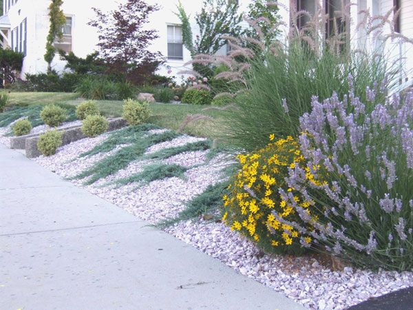 shrubs planted slope. ground-hugging