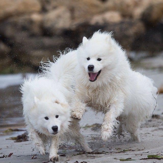 Wet & Wild Wednesday 💦 Perros, Mejores amigos, Amigo