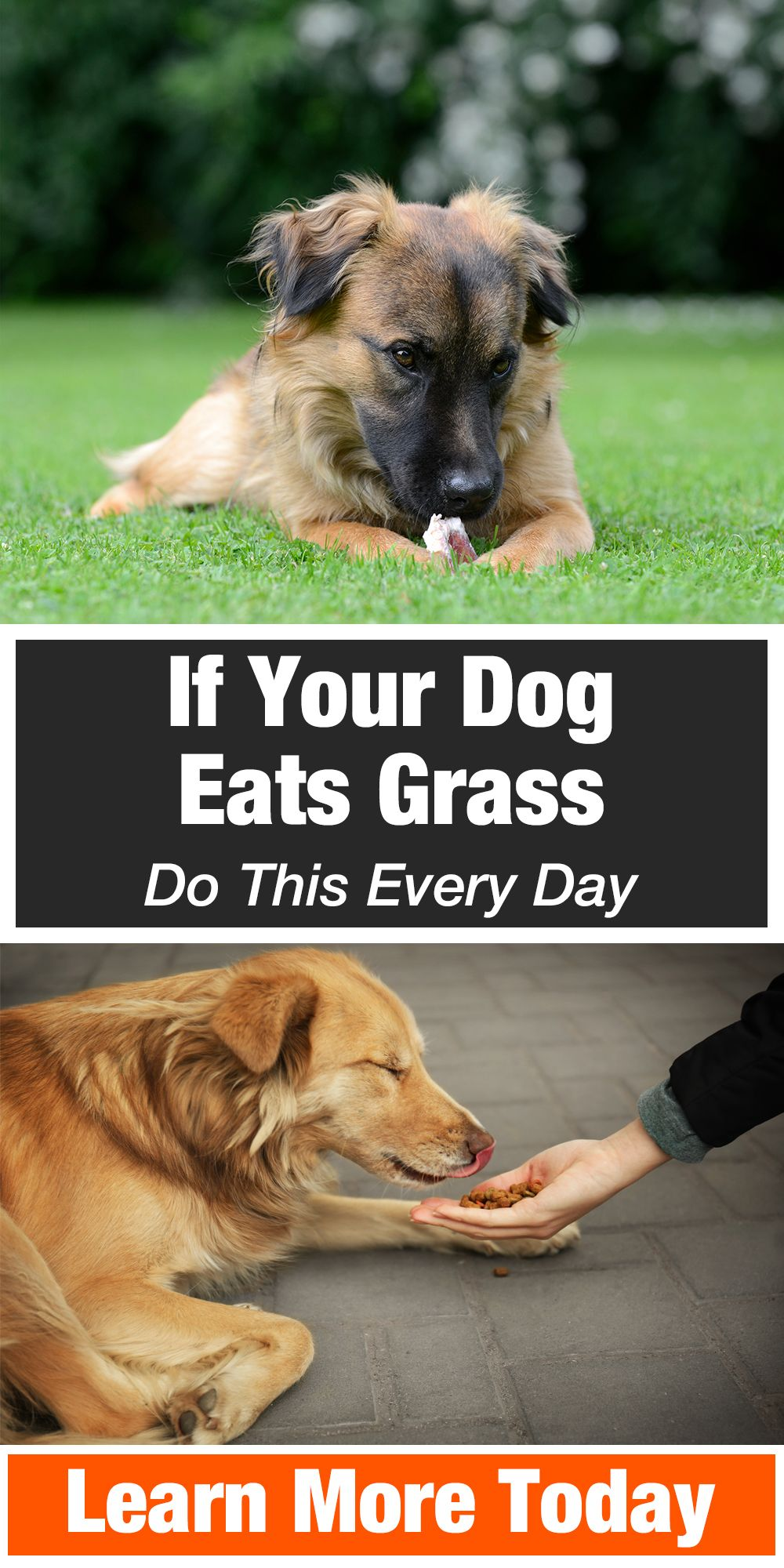 If Your Dog Eats Grass Do This Every Day Pet Health Dog Eating Dogs
