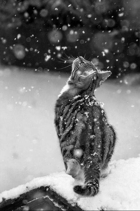 Monchatdore Cat Chat Gato Adorable Catlover
