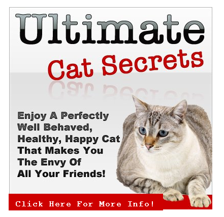 Ultimate Cat Secrets Cat biting, Pregnant cat, Cat behavior