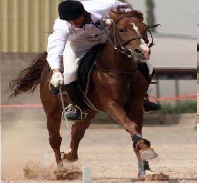 صحيفة أمريكية 6 أسباب تمنع إيران من التدخل باليمن Horses Animals