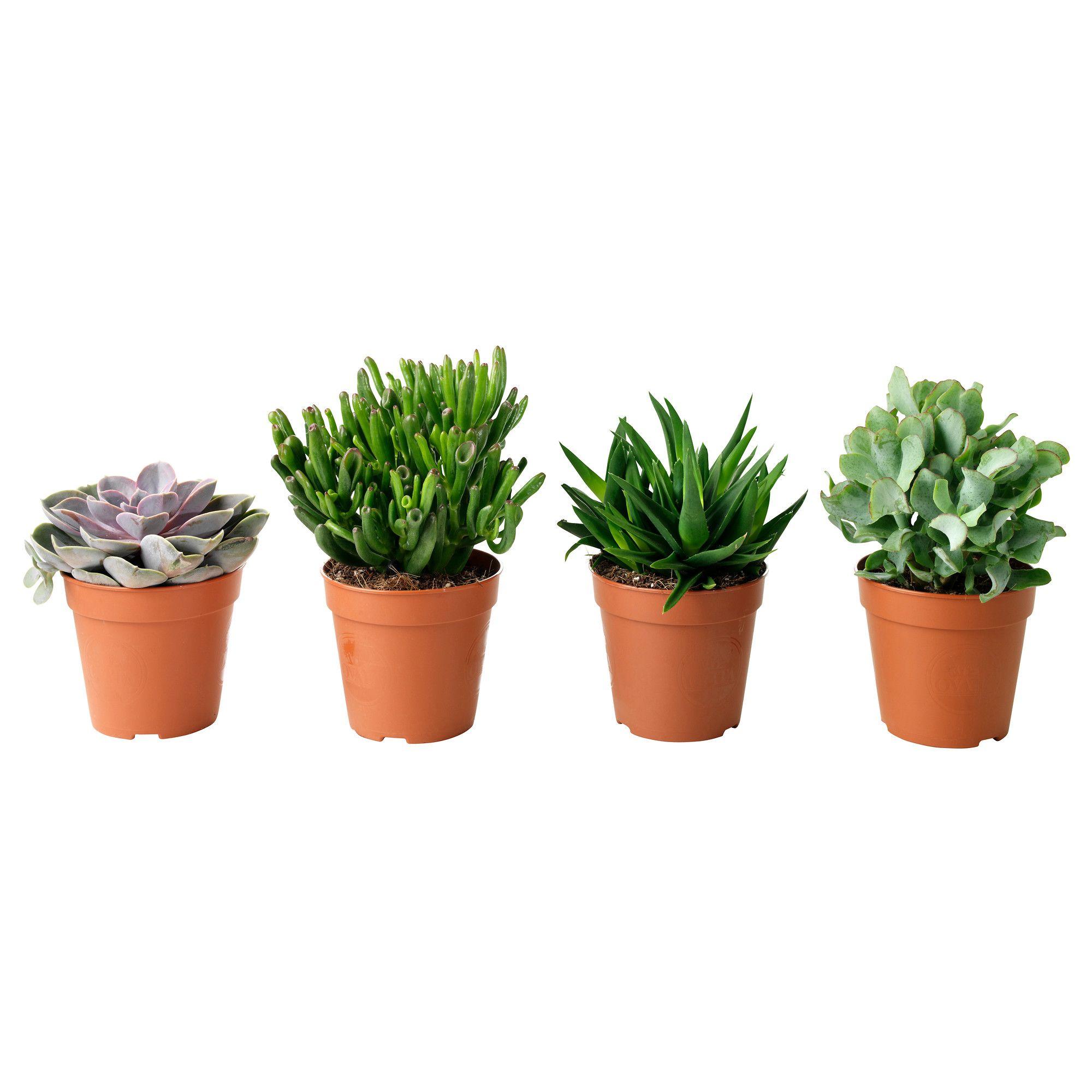 Australia Planting Succulents Plants Succulents 400 x 300