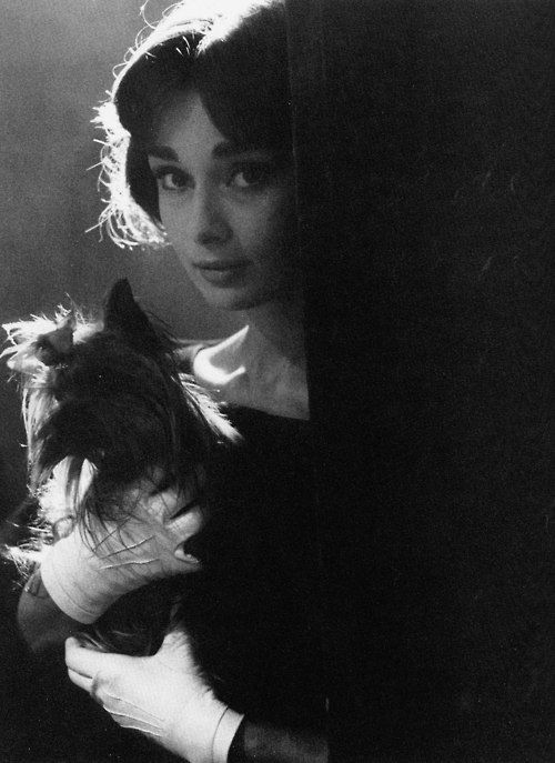 "Audrey Hepburn ""This was one of the few photographs my mother kept of herself in a frame at her home-probably because of Famous, her first Yorkshire terrier"". -Sean Ferrer"