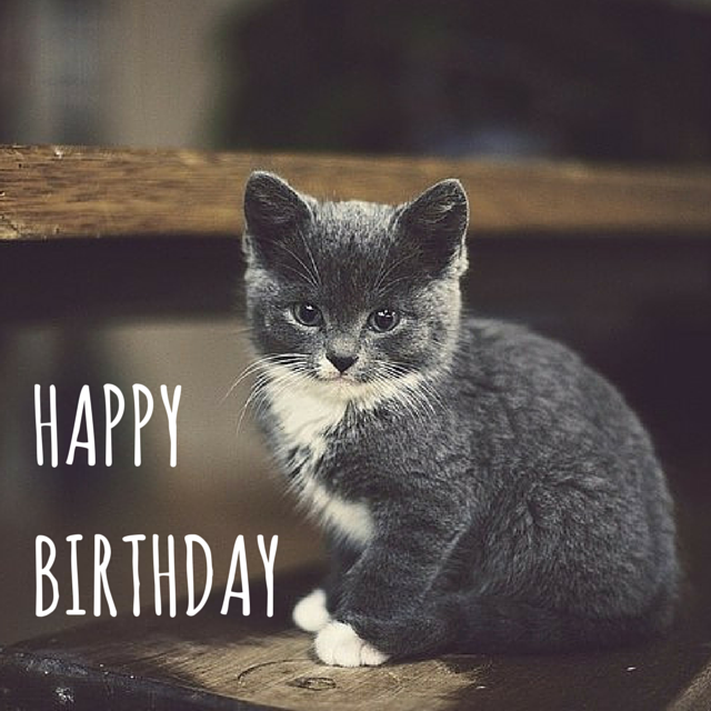 Happy Birthday Cat Wishes: Top 100 Birthday Wishes For Your Friends