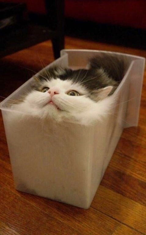 Photo of 22 cats, whose bodies are obviously liquid