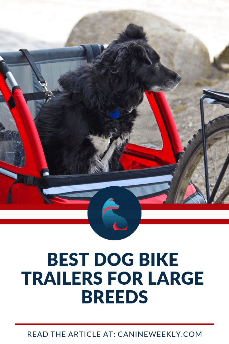 6 Best Dog Bike Trailers 2020 (Top Picks for Large Dogs