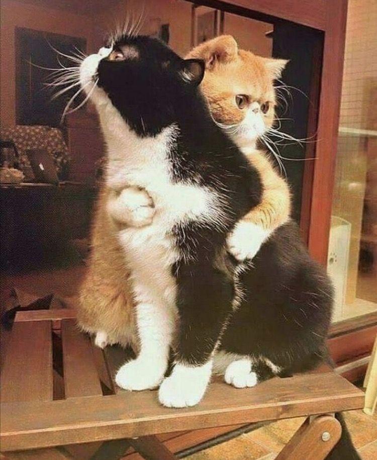 Gatos Amor Babies Cats Cute Animals Cute Cats