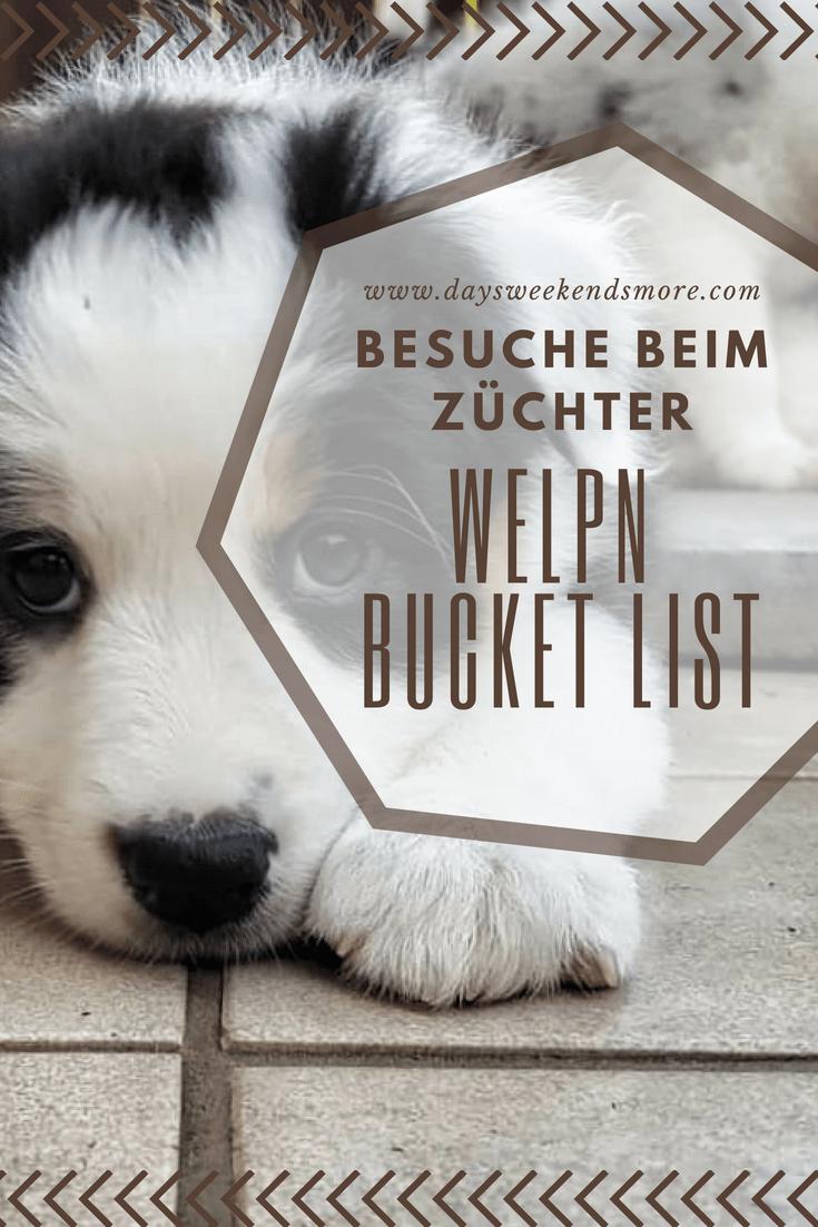 Chili S Bucket List Besuche Beim Zuchter Und Ganz Viel Knuddeln In 2020 Knuddeln Hundewelpen Hunde
