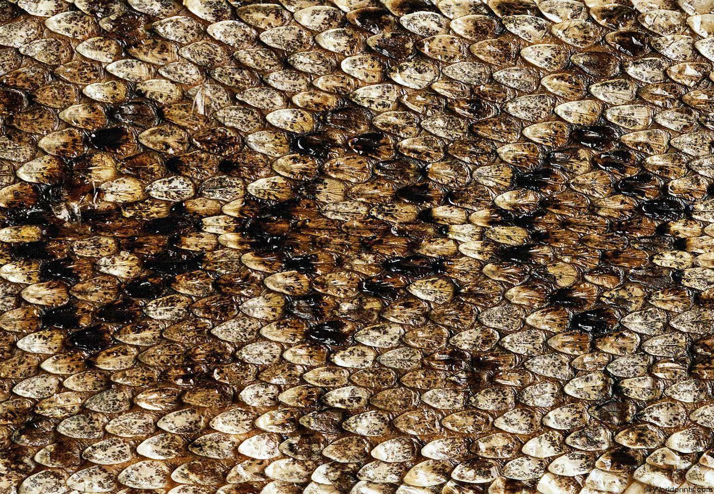 Snakeskin Inspiration Animal Print Wallpaper Printable