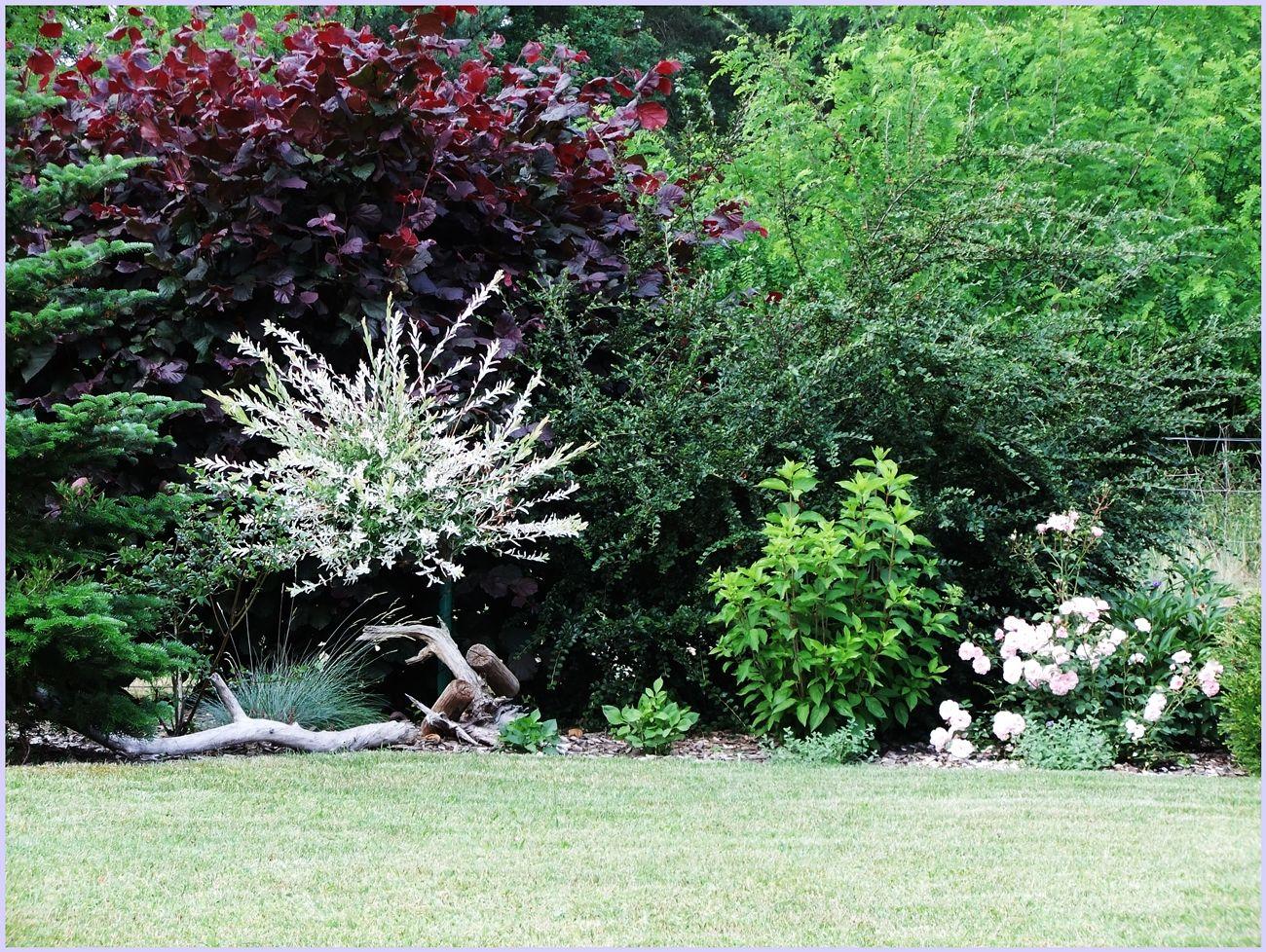 gestaltungsideen grundstücksgrenze grundstücksgrenze - bilder und fotos | garden ideas | garten