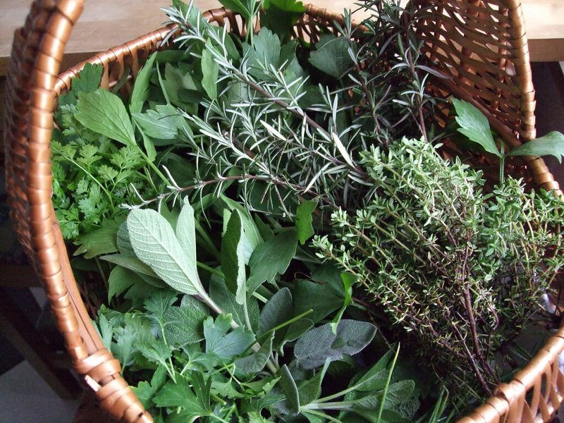 Лечебные свойства травы для похудения