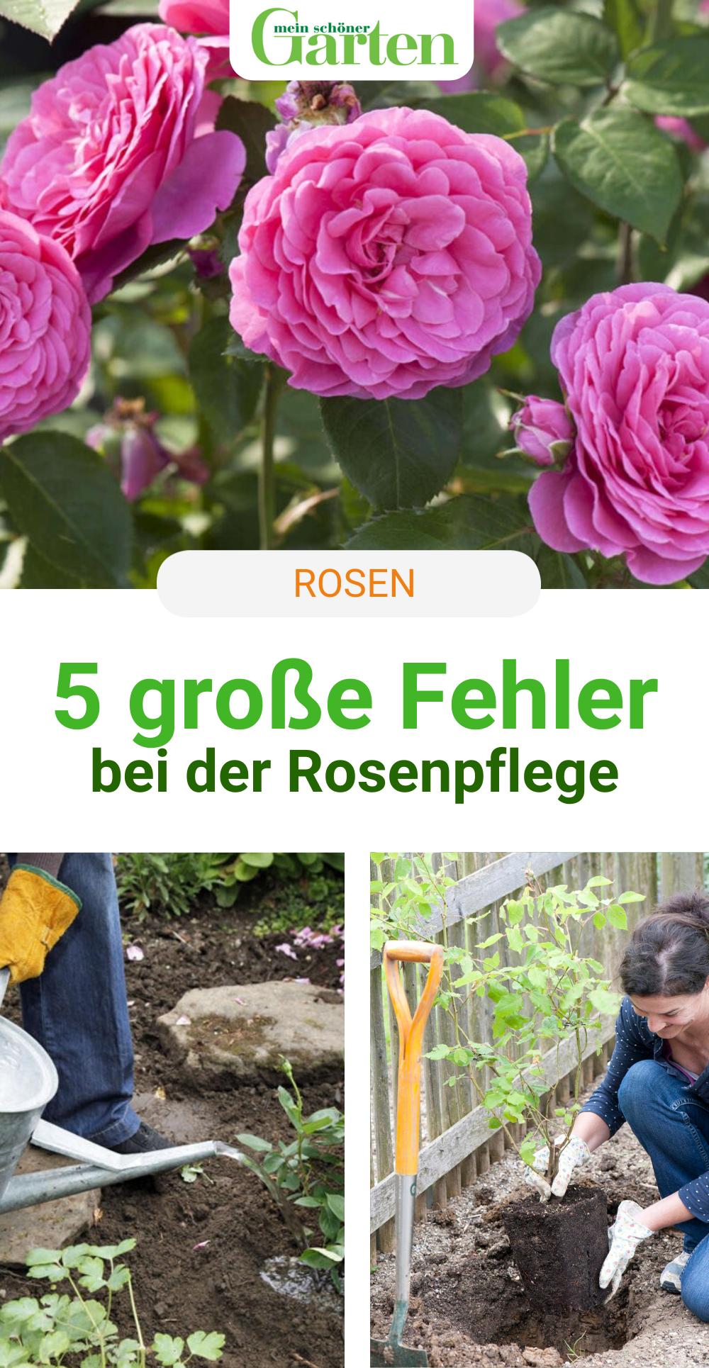 Die 5 Grossten Fehler Bei Der Rosenpflege Rosenpflege Garten Bepflanzen Blumen Fur Garten