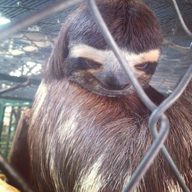 Creepy sloth. | Funnies | Funny, Funny pictures can't stop ...