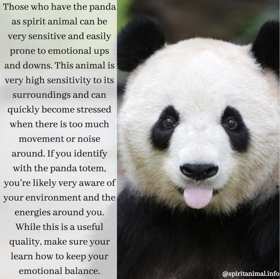Panda Spirit Animal Totem Meaning Spirit Animal Totem Spirit Animal Your Spirit Animal