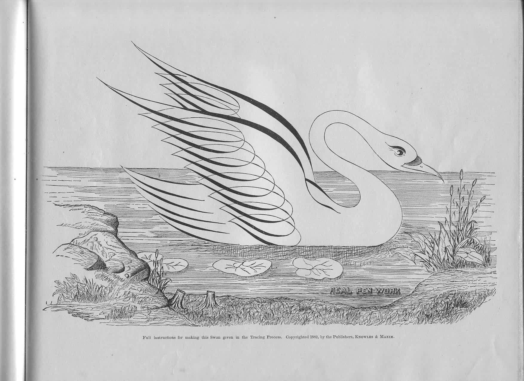 Real Pen Work Script Stroke Swan