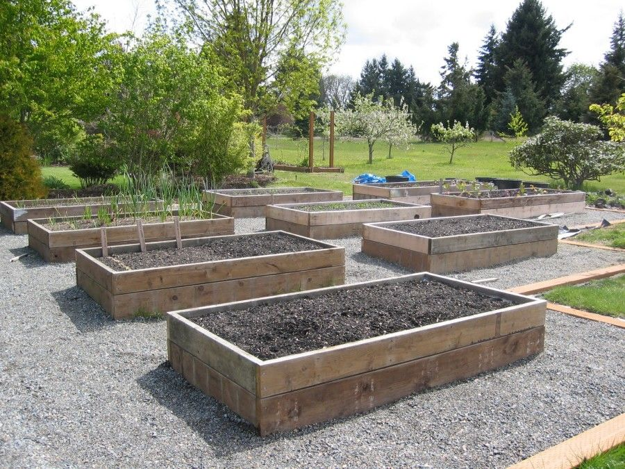 Garden And Patio, Vegetable Garden Layout Raised Beds With Wood Material  And Great Plant As