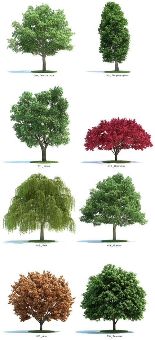 Verdes - árboles jardines Pinterest Verde, Paisajismo y