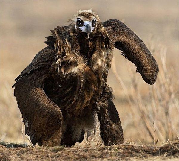 Kuvahaun tulos haulle the most ugliest bird