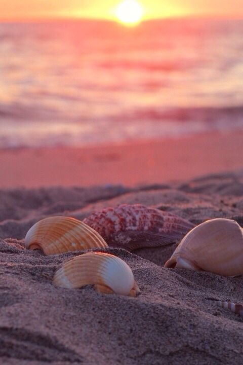 Sfondo Conchiglie Spiaggia Non Solo Sfondi Nel 2019 Spiaggia
