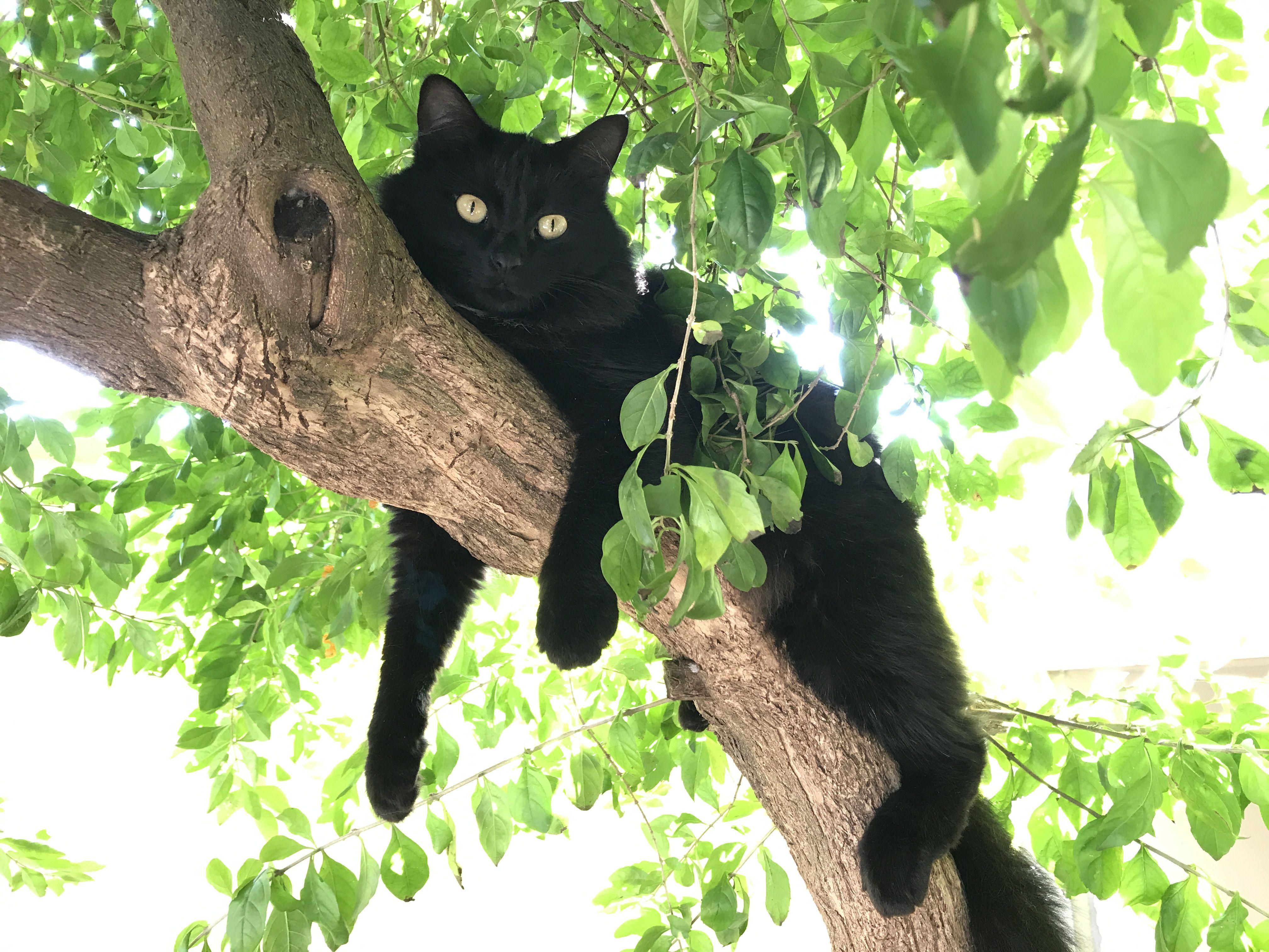 Gatto sul tronco
