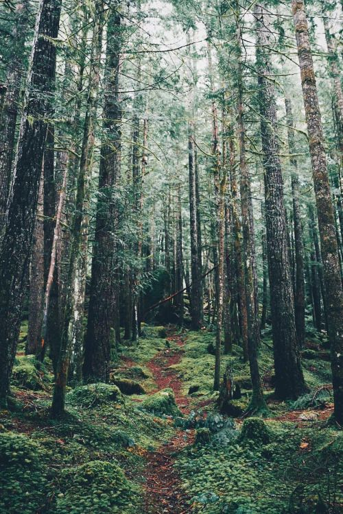 Desvre Nature Photography Forest Photography Beautiful Nature