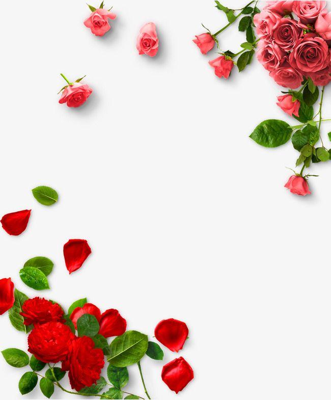 a184308d7929 Pink Rose
