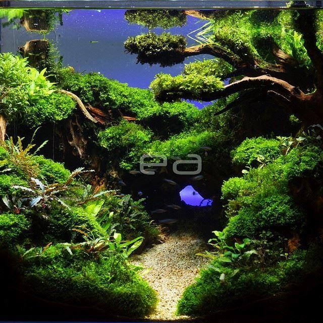 Aqua scape | Fish tank plants, Fresh water fish tank ...