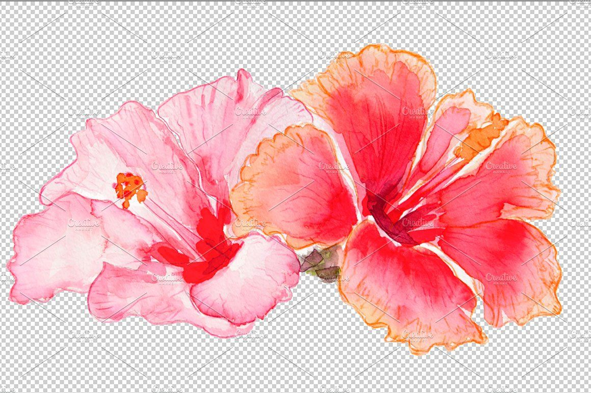 Hibiscus Flowers Watercolor Blomster