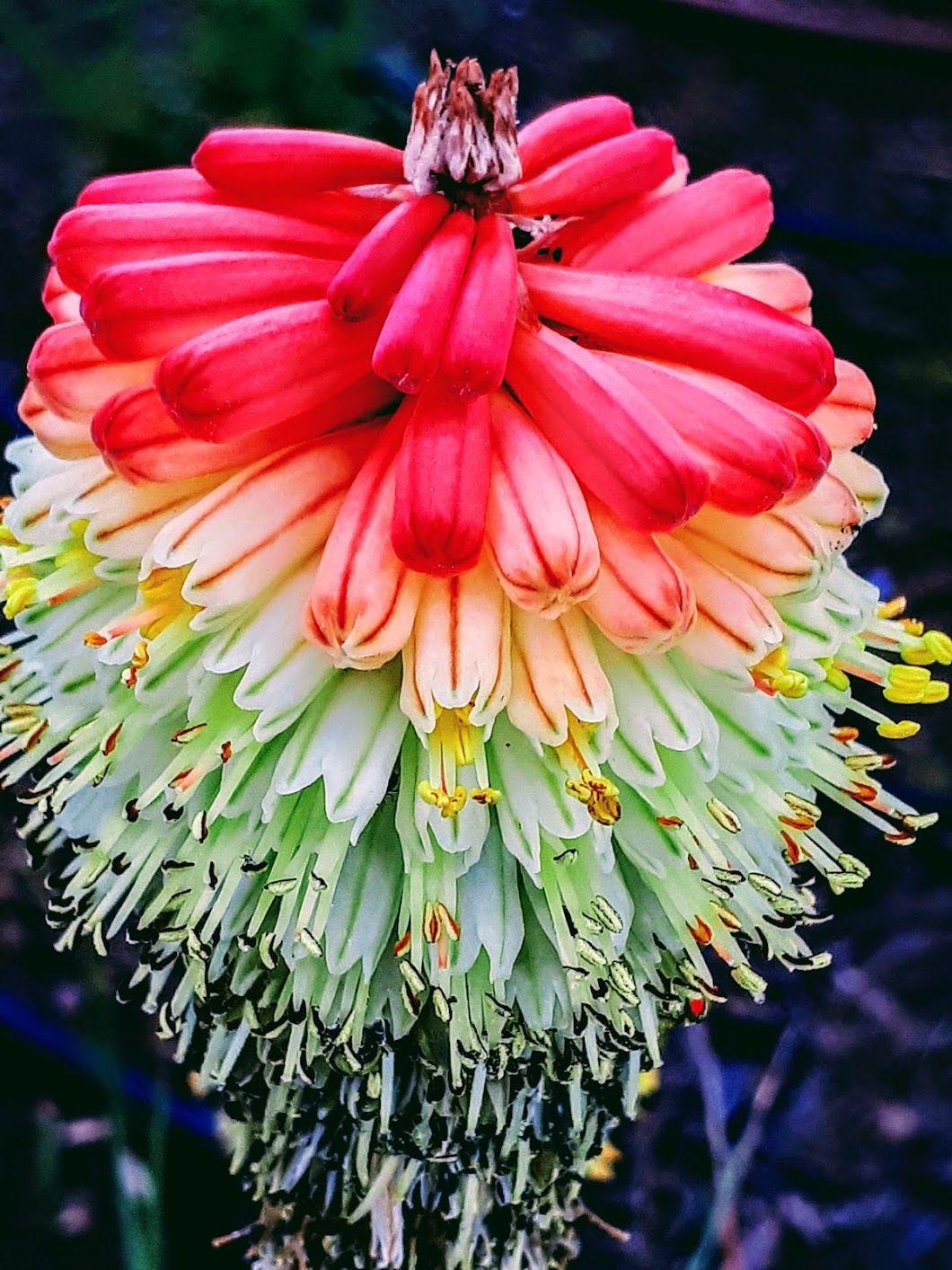 Картинки необычного красивого цветка