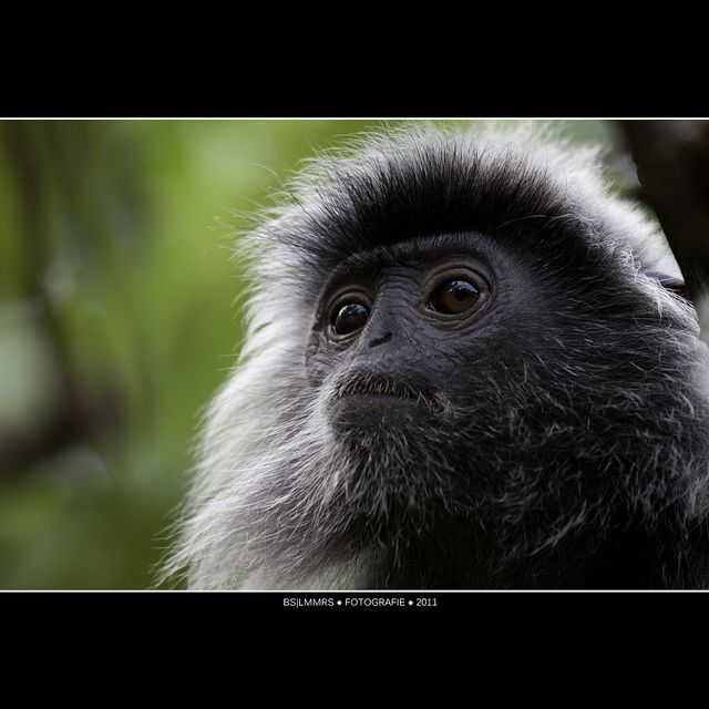 Malaysia: Monkey business - I see everything [Explored] | Flickr - Photo Sharing!