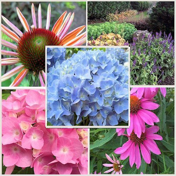 65e495fa7d5d224c534f6f993e55b844 - What Zone Is Long Island For Gardening