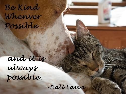 Cat Dog Quotes Dog Quotes Dog Friends Dog Cat