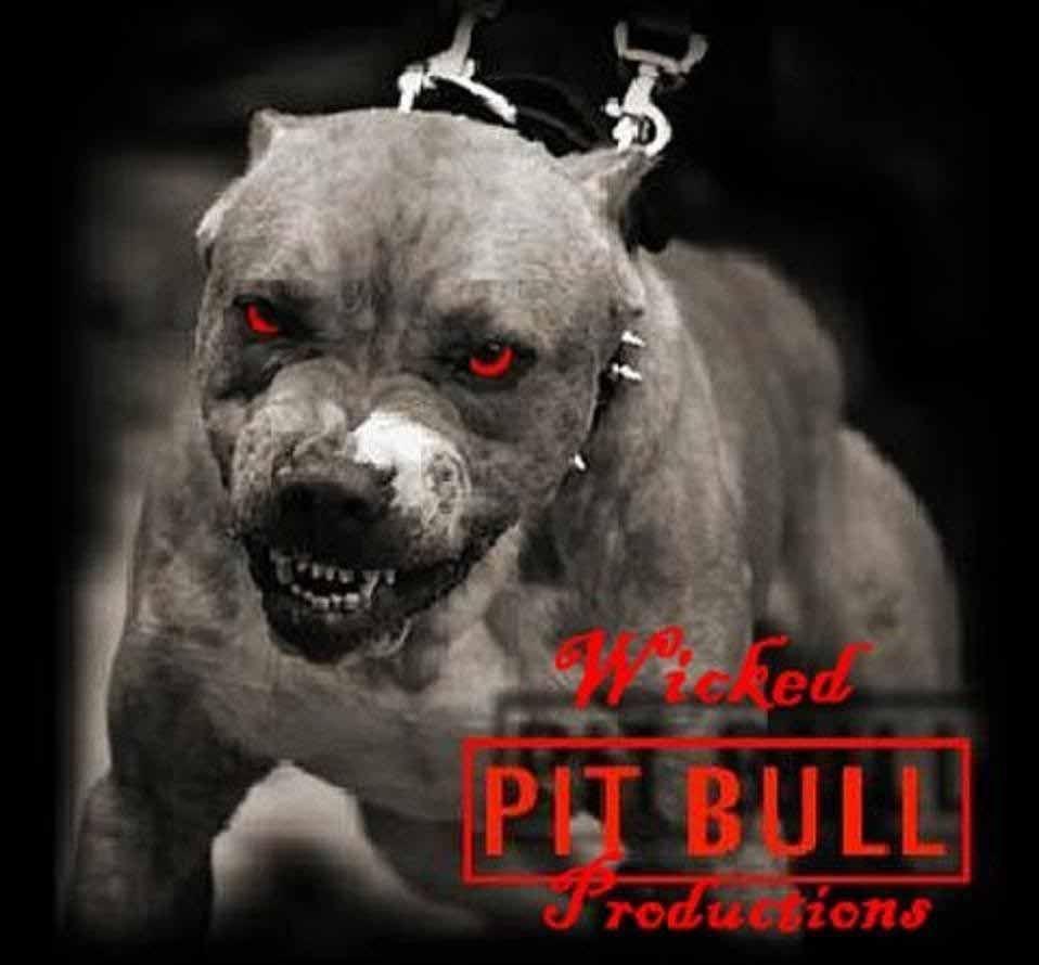 Cute Rottweiler Puppy Wallpaper Hd Wallpapers Pitbull Dog Wallpapers Pitbulls