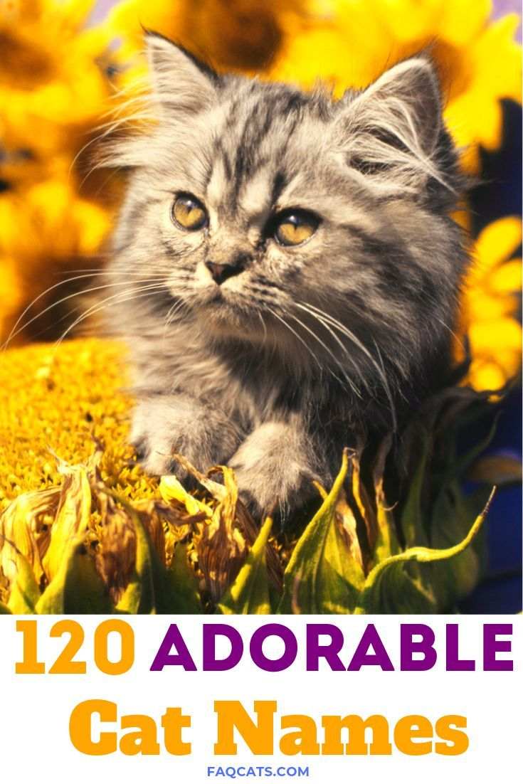 120 Adorable Unisex Tabby Cat Names Tabby cat names, Boy